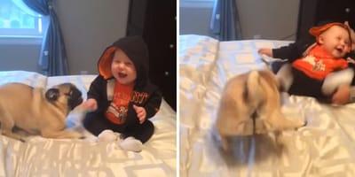 montaje perro y niño riendo