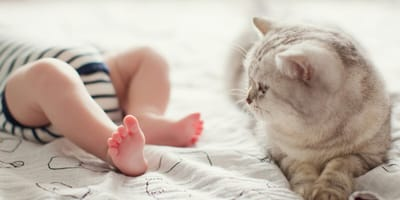 How to safely introduce your resident cat to your newborn baby