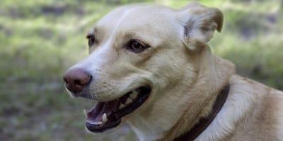 Schmerz und Lähmung: Das Cauda Equina Syndrom bei älteren Hunden