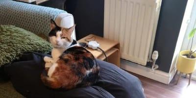 gatto-seduto-su-gambe-finte