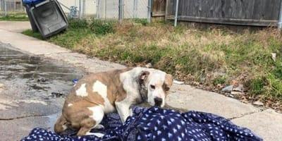 Dog abandoned on street with blanket