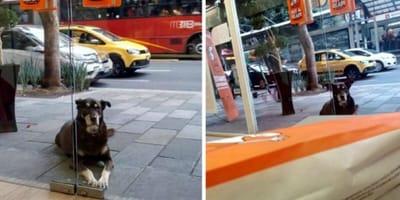 Pies przed pizzerią