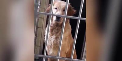 Il coronavirus blocca un uomo a Wuhan, paura per il suo cane (Video)