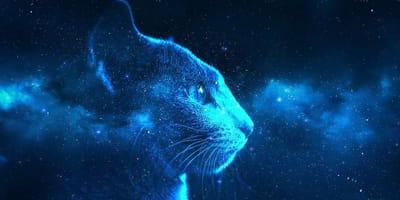 La razza di gatto ideale per ogni segno zodiacale!