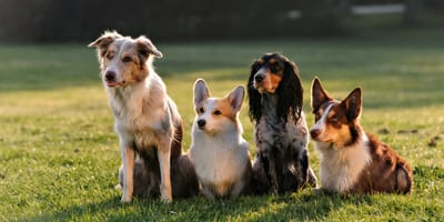 A bunch of dogs in a field
