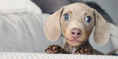7 dogs that deserve more than 10 out of 10