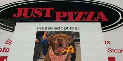 Pizza restaurant puts dogs on boxes to help with adoption