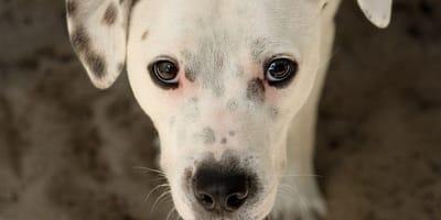 perro perdido maltratado