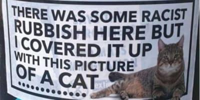 Anti racism cat poster