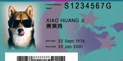 ID card made for Singapore dog