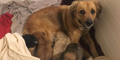 Ava went form stray dog to supermum