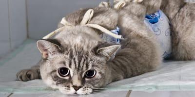 Was kostet die Kastration von Kater und Katze?