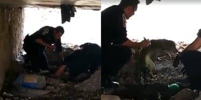 perro tirado a la coladera es rescatado
