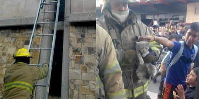 gato es rescatado por bomberos de la catedral de juarez