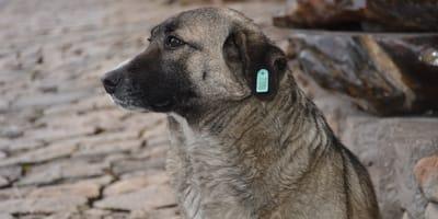 Se acerca a ayudar a un cachorro y de inmediato tratan de detenerla