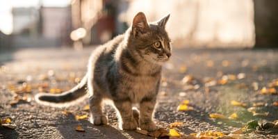 gato perdido vuelta a casa