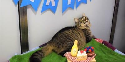 Urodziny kotki Monique