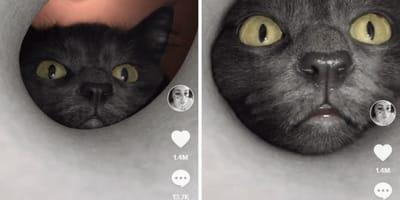 gatto-grigio-infila-testa-nel-tubo
