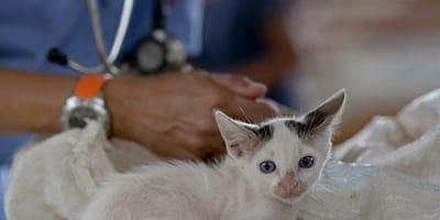 gattino-dal-veterinario