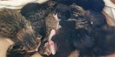 Abbandonano 9 gattini in modo crudele: è caccia ai responsabili