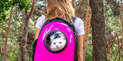 Cómo pasear a un gato