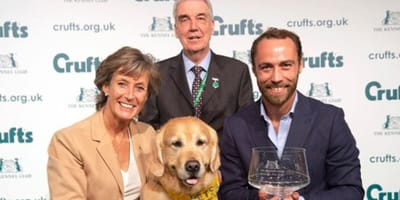 golden retriever receiving award with james middleton