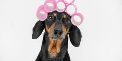 A qué perros no se les corta el pelo
