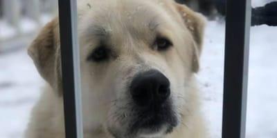 Der heldenhafte Labrador Doc