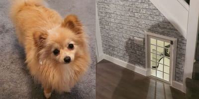 Dog house for Pomeranian