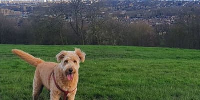 5 of the best dog walking parks in London