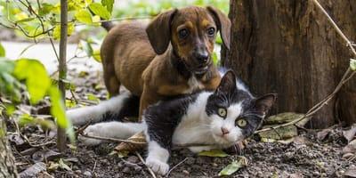 cane-gatto-all'esterno