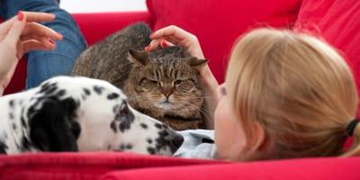 cuarentena coronavirus perro gato casa
