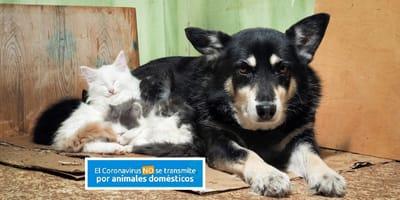 perros gatos abandonados miedo coronavirus espana