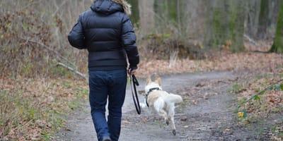 <p>Quanto tempo dedicare al cane lo stabilisce il suo grado di felicit&agrave;.</p>