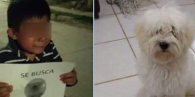 niño perdió a su perrito