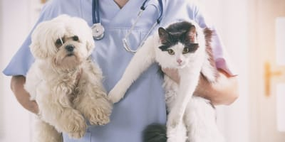 veterinario tiene in braccio un cane e un gatto