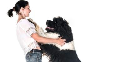 7 skutecznych metod na oduczenie psa skakania na domowników