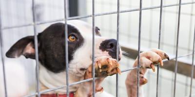 cane-rifugio-guarda-speranzoso