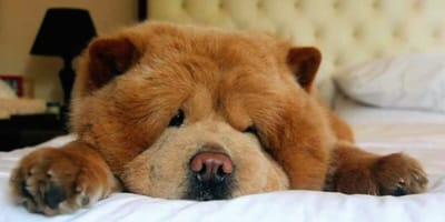 Publikuje zdjęcie swojego psa: tysiące internautów intryguje pewien szczegół
