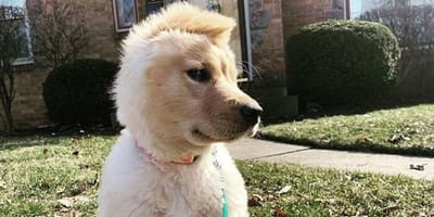 Rae the unicorn dog sits in front of house