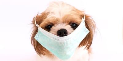 cane con mascherina