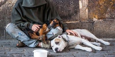 senzatetto con cani