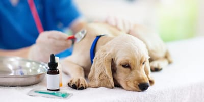 What should I do if my dog has an open wound?