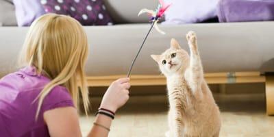 Come occupare il gatto in casa durante la quarantena?