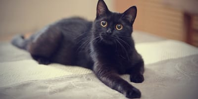 Cat name ideas for your black cat