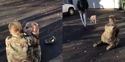 Soldatin kehrt vom Einsatz zurück: Die Reaktion ihres Hundes bricht ihr das Herz