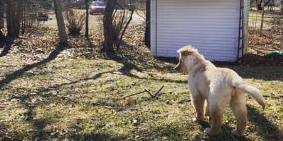 Rae, pies jednorożec, siedzi przed domem