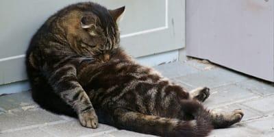 Szary kot ze złotymi oczami