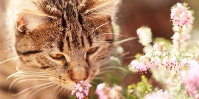 gatto annusa fiori