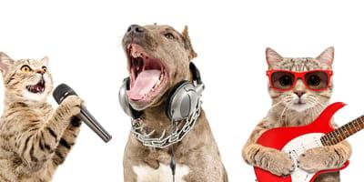 perro y gatos en concierto